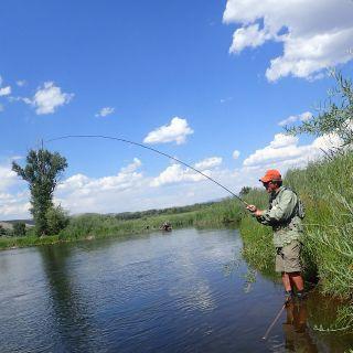 Good fish in Colorado.