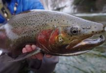 Scott Grassi 's Fly-fishing Pictureof a Steelhead| Fly dreamers