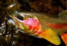 10 consejos para devolver un pez correctamente