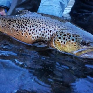 Beautiful browns in the fall.