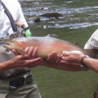 Daniel Boone's Nantahala Fly Fishing Company Steelhead