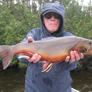 Large Igloo Lake Brook Trout