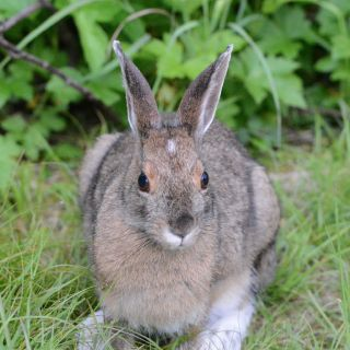 Bunny at Igloo Lake Labrador