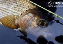 Uros Kristan landed this Arctic grayling in Ljubljanica River - Fly Fishing | Fly dreamers