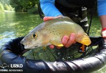 Fly Fishing for Lady of the river in Sava Bohinjka River | Fly dreamers