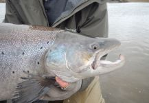 Scott Marr 's Fly-fishing Photo of a von Behr trout | Fly dreamers