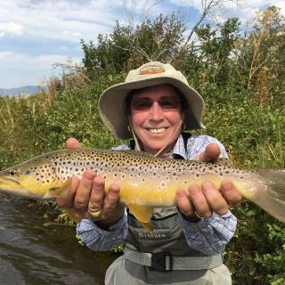 September brown trout on the Madison River near Ennis Montana