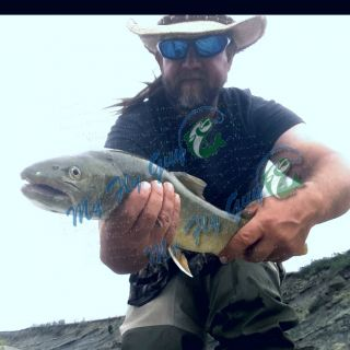 If you've ever wanted to get into Bull Trout get a hold of me at myflyguy.ca