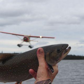 Beaver floatplane & brook trout at Igloo Lake Labrador