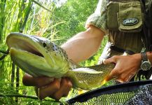 Fly-fishing Pic of Salmo fario shared by BERNET Valentin | Fly dreamers