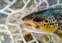 Chris Watson 's Fly-fishing Imageof a Browns| Fly dreamers