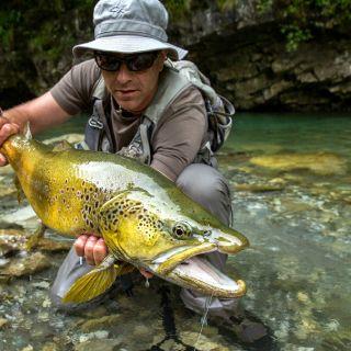 Lustrik and Brown trout