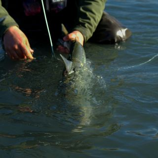 We emphasize best catch and release practices.