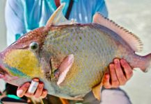 Chris Eckley 's Fly-fishing Photo of a Triggerfish | Fly dreamers