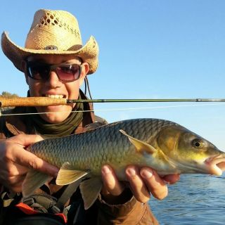 Small mouth Yellow fish from the Vaal River
