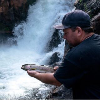 Rainbow trout at waterfalls