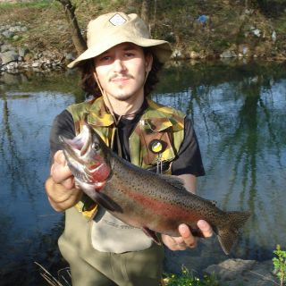 Rainbow trout from river Vipava