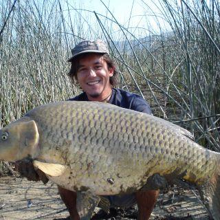 Carp from Cerknica lake