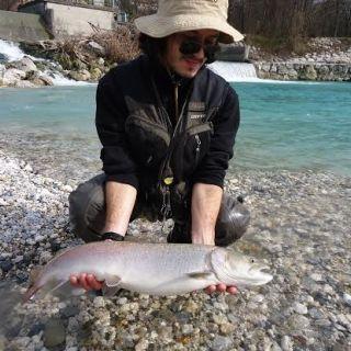 Danube salmon - Huchen from river Sava