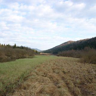 river Ribnica