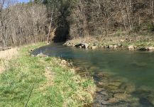 Fly-fishing Situation of Rainbow trout shared by Dave Kane