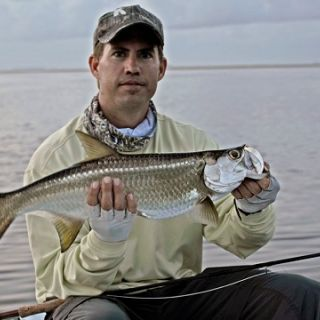 Baby tarpon on fly.