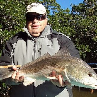 Redfish on fly.