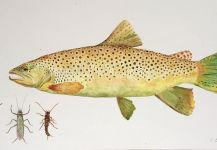 Five Questions with Fly Fishing Artist Carol Blum McMurrain