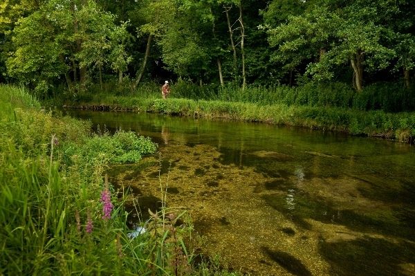 CHALK - a hymn to the Chalkstreams of southern England