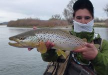 Fly-fishing Pictureof European brown trout shared by Jimbo Busse | Fly dreamers