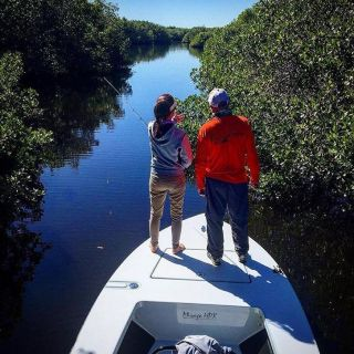 Looking for baby tarpon