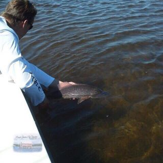 Redfish release