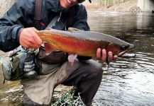 Jared Martin 's Fly-fishing Photoof a Rainbow trout| Fly dreamers
