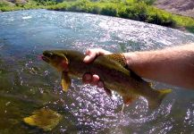 Chris Watson 's Fly-fishing Photoof a brown trout| Fly dreamers