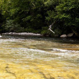 fly fishing rio Irati