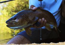 Kid Ocelos 's Fly-fishing Picof a von Behr trout| Fly dreamers