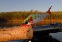 Henrik Megyer 's Fly-tyingfor Aspius aspius -Pic | Fly dreamers