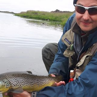Brown-trout from laxá (presthvammur)