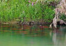 Bristol Bay: EPA Comment Period Open!