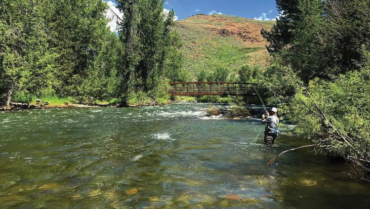 Fishing report silver creek by silver creek outfitters for Silver creek fishing report