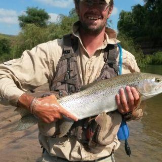 Trophy wild Rainbow trout