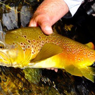 Bush stream gold