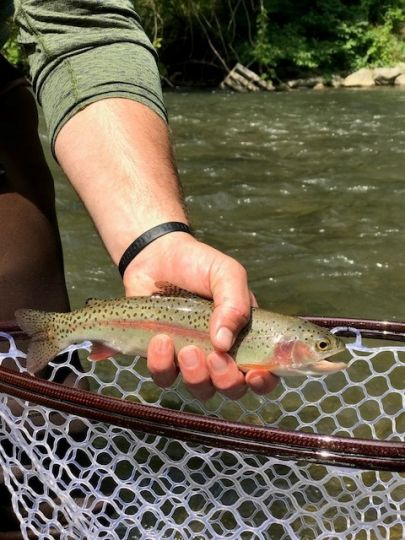 Fishing report spring creek by scott grassi fly dreamers for Spring creek pa fishing report