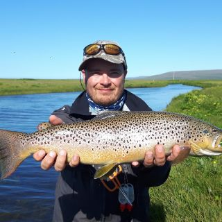 Nice Brown trout from Lónsá
