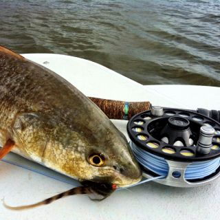 Another victim of the Redfish Crack fly.