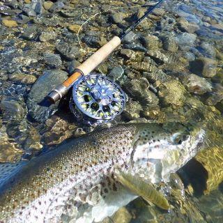 Mid winter sea run trout