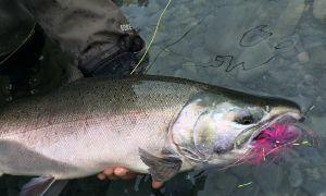 Kenai River, Cooper Landing, Alaska, United States