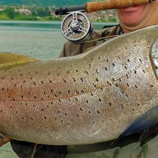 Huchen- Danube Salmon On The Nymph Montenegro