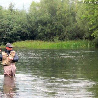 Swiss Flyfisher Guided by Ivan Randjelovic With Grayling On Dry Fly