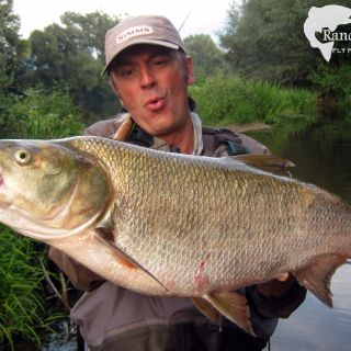 Trophy Asp (80+) on #5 Fly Rod Serbia